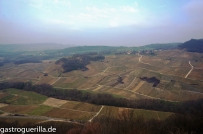 Weinberge Landschaft Jura